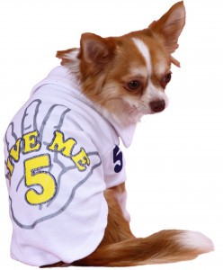 T229-DOG