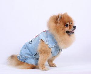 DJ034-DOG3