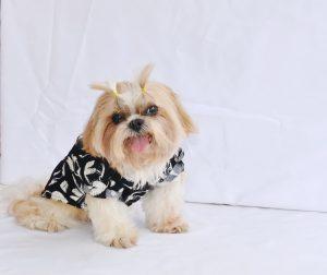 S048-DOG4
