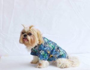 S050-DOG1